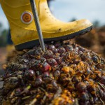 В РФ отказались вводить акцизы на пальмовое масло и вредные продукты