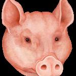 Россельхознадзор будет настаивать на запрете свинины из Белоруссии
